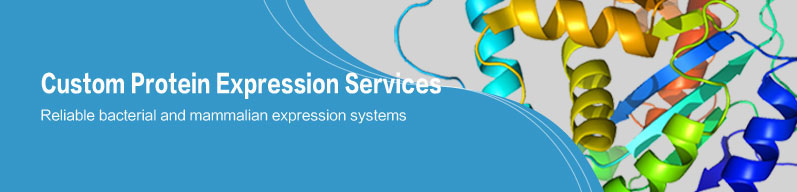 Custom Protein Expression Services